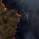 Amazônia: da centralidade da biodiversidade à destruição