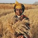 FAO: Compromisso é erradicar a fome no planeta