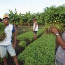 ONU destaca papel do Brasil na promoção da agricultura familiar