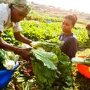 Comida produzida na África para africanos: inspiração brasileira