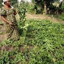 Agência da ONU pede apoio para agricultores no nordeste da Nigéria