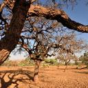 FAO abrirá escritório no Nordeste e ampliará iniciativas no semiárido