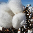 Brasil ajuda países africanos a modernizar produção de algodão