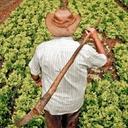 Com Lula e Dilma, Programa para agricultura familiar triplicou beneficiados na BA
