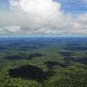 Estão vendendo a maior reserva florestal do mundo pra estrangeiro explorar