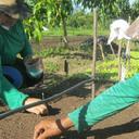 Artigo: Agricultura familiar promove desenvolvimento rural sustentável e a Agenda 2030
