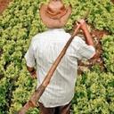 Agricultores temem extinção do PAA
