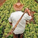 70% do que se come no Brasil vem da agricultura familiar