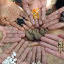 PL quer proibir agricultores de produzir, distribuir e armazenar sementes