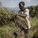 FAO pede renovação do compromisso pela erradicação da fome na África