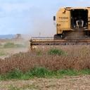 FAO: agricultura amorteceu crescimento fraco da economia brasileira