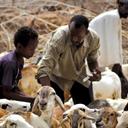 FAO pede US$ 1 bilhão para combater fome em 26 países