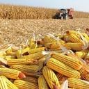 Com indústria e serviços estagnados, agropecuária puxa o PIB. Investimento cai