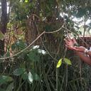 A ciência e vivência dos terreiros de matriz africana