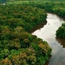 Com Lula, ritmo de desmatamento da Amazônia caiu