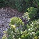 Sem política ambiental, desmatamento bate recorde